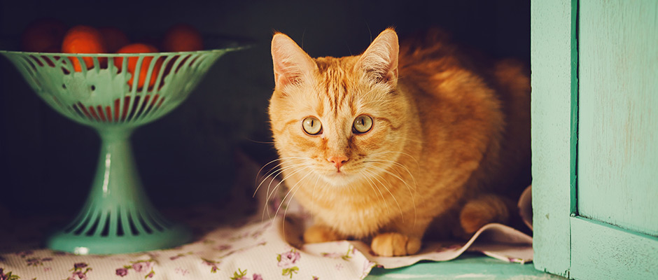 Poison Prevention for Pets: Around the House   Arbutus West Animal Clinic