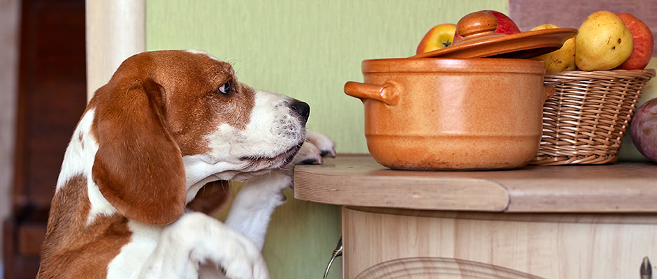 Poison Prevention for Pets: Food   Arbutus West Animal Clinic