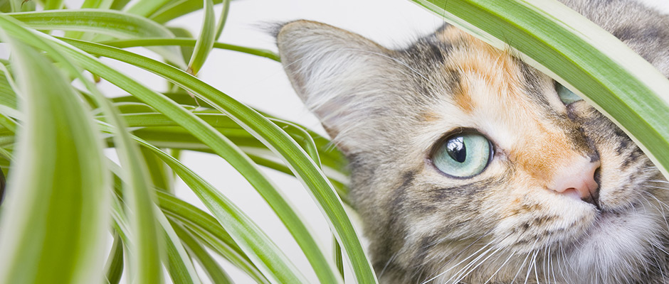 Poison Prevention for Pets: Toxic Plants   Arbutus West Animal Clinic